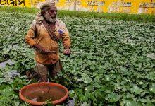 Photo of বাড়ছে পানি ফলের চাহিদা, কিন্তু উপযুক্ত প্রশিক্ষণের অভাবে চাষ করতে পারছেন না নদীয়ার কৃষকেরা