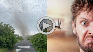 Photo of Viral Video: তীব্র গতিতে ধেয়ে আসছে মশাদের ঘূর্ণিঝড়, আতঙ্কে জর্জরিত মানুষ