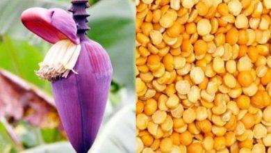 Photo of Recipe: মটর ডাল দিয়ে রান্না করুন 'Super Testy' মোচা ঘণ্ট, শিখে নিন সহজ রেসিপি