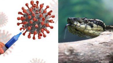 Photo of বিষে-বিষে বিষক্ষয়! মারাত্মক এই সাপের বিষেই ধ্বংস হবে Corona? চাঞ্চল্যকর তথ্য দিলেন ব্রাজিলের গবেষকরা