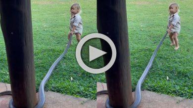 Photo of Viral Video: বিশালকার সাপের লেজ ধরে নির্ভয়ে টান, একরত্তি মেয়ের দুঃসাহস দেখে হতবাক নেটিজেনরা